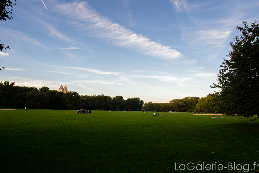 terrain vide à central parc