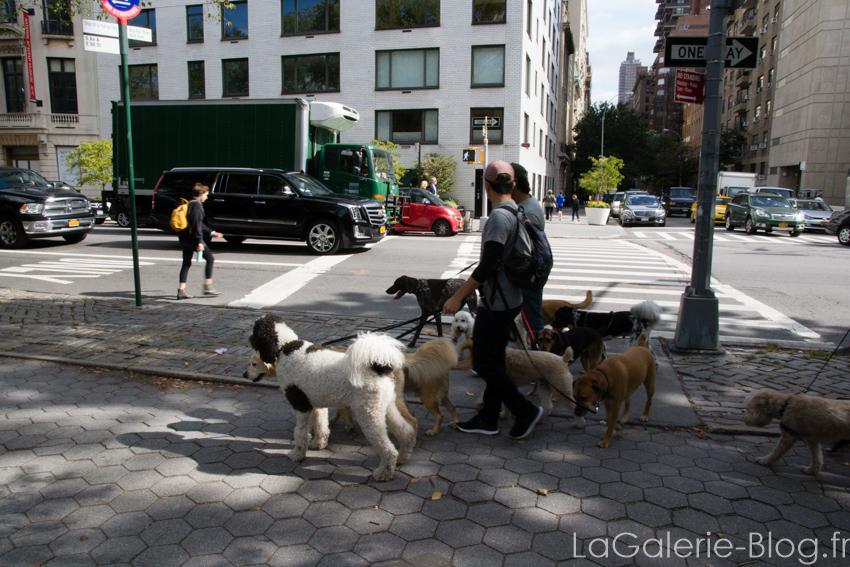 des dogs sitters discutant entre eux
