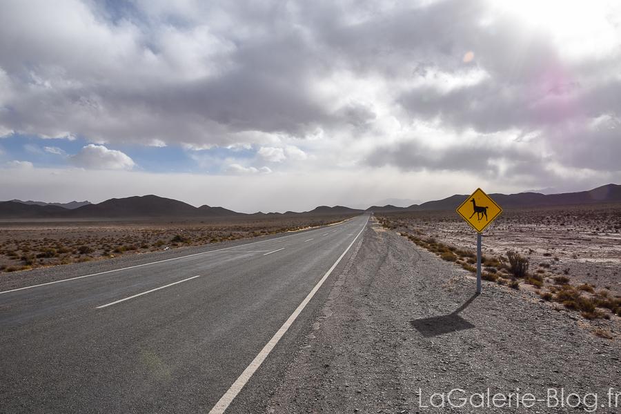 panneau attention lamas au bord de la route