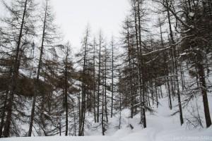 arbres eneigés