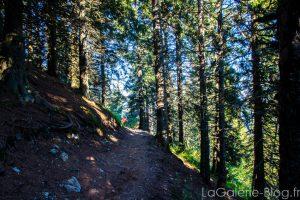 foret randonnée lac crozet