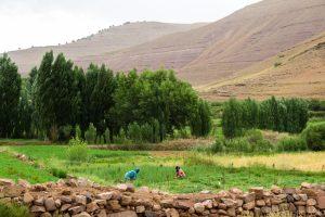 Agricultrices au trail dans un champs