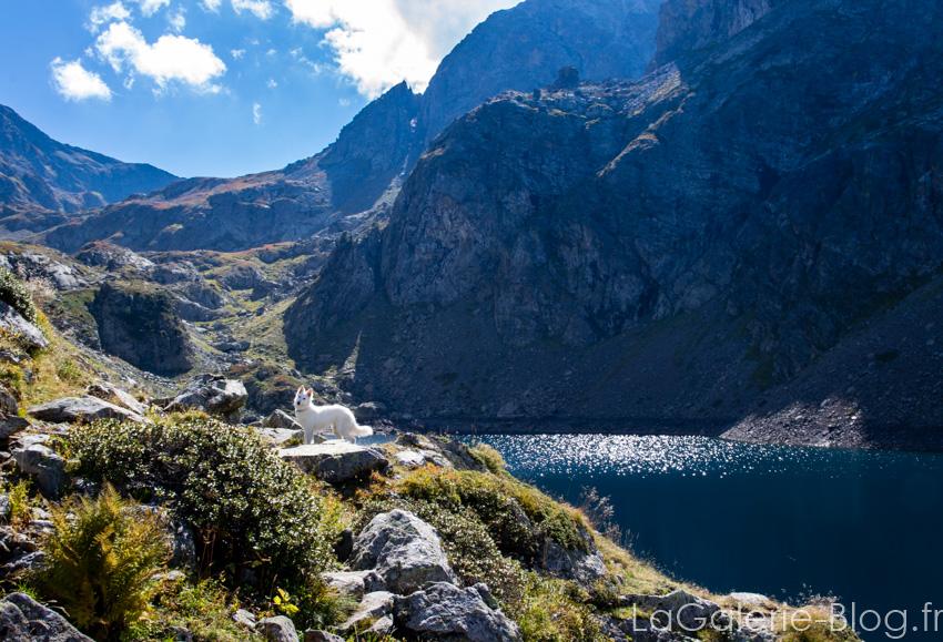 vue sur le lac crozet et montagnes avec un chien au centre