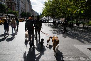 promeneurs de chiens