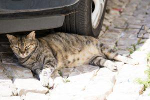 chat sous une voiture
