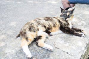 chat se prélassant sur un mur