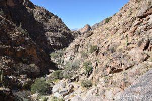 montagne de cactus