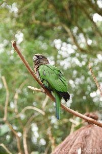 parc des oiseaux coté bresilien