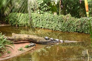 tortues et crocodile