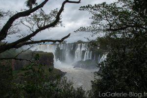 vegetation autours des cascades