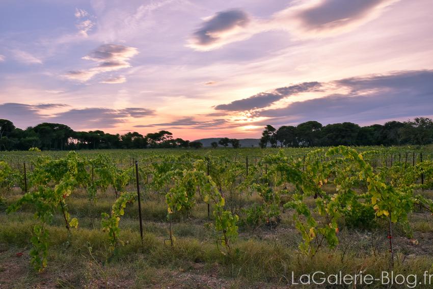 coucher de soleil sur vignoble